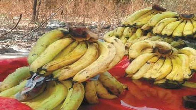 केळं हे आरोग्याला चांगलं असतं. पण ज्या केळ्यांवर काळे डाग पडलेले असतात, त्याचा आरोग्यासाठी जास्त फायदा होतो.