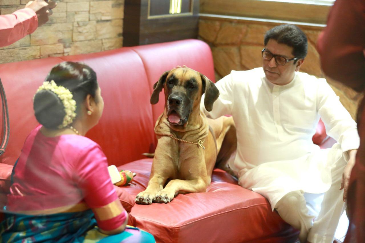 राज ठाकरेंच्या लाडक्या जेम्स आणि बॉण्डचं हे पिल्लू आहे.
