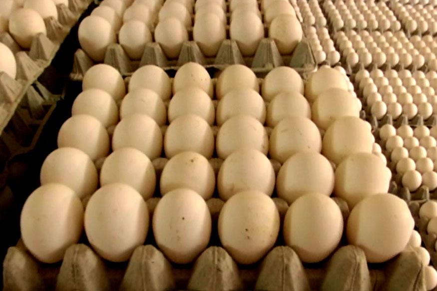 कोंबड्यांची वाढ होण्यासाठी 20 आठवडे लागतात. त्या काळात किमान एक ते दीड लाख रुपये इतका खर्च होतो. एक कोंबडी एका वर्षात 300 अंडी घालते. 20 आठवड्यांनी कोंबडी अंडी घालायला सुरु करते त्यानंतर त्यांच्या खाद्य आणि औषधांवर 3 ते 4 लाख रुपये इतका खर्च होतो.