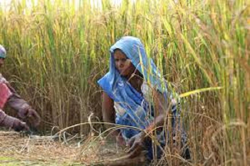 शेतकऱ्यांना 6 हजार रुपये देण्याच्या निर्णयाची अंमलबजावणी महाराष्ट्रातून