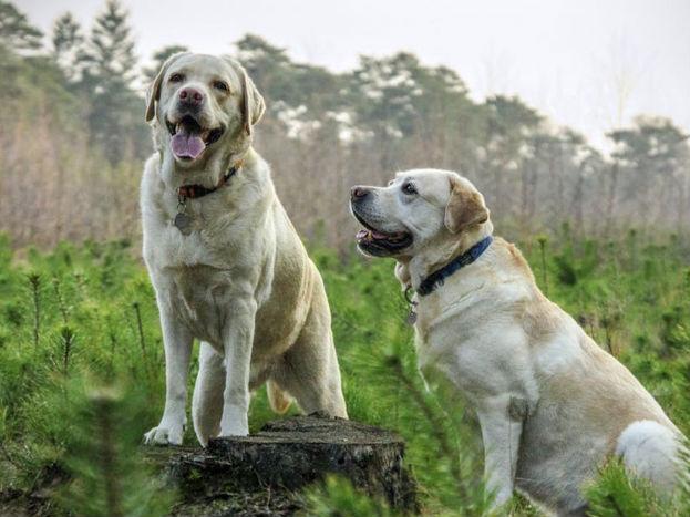 कुत्रा तुमची उजवी बाजू चाटत असेल तर तुम्ही तुमच्या कामात यशस्वी व्हाल.