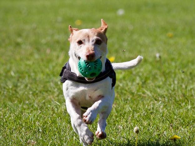 तुम्ही कुठे फिरायला निघालात आणि तुमच्यावर कुत्रा भुंकायला लागला किंवा गुरगुरायला लागला तर समजा तुम्हाला पैशाचं नुकसान होणार आहे.