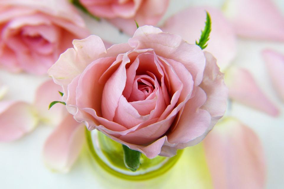 सहा गुलाबांचा अर्थ असा की हे प्रेम कधीच संपणार नाही.