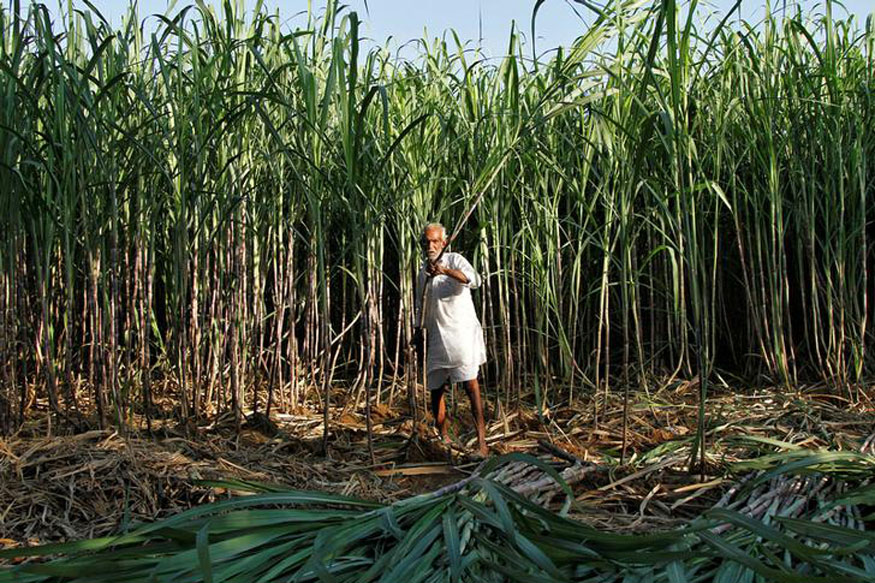 उसाच्या गाळप हंगामाला सुरुवात, शेतकरी संघटना यंदाही आंदोलनाच्या भूमिकेवर ठाम