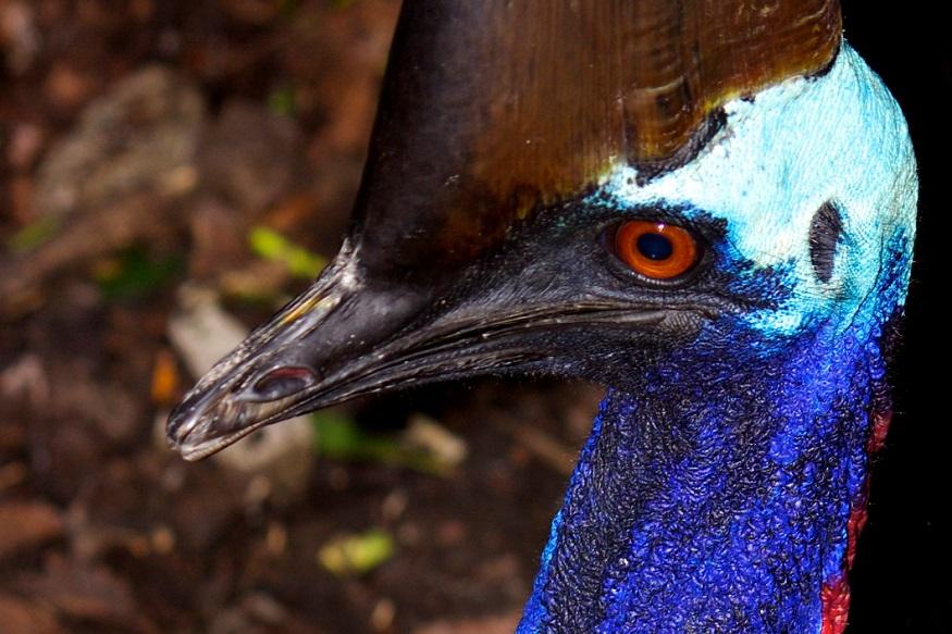 पक्षाच्या हल्ल्यात मृत्यू झालेल्या व्यक्तीची ओळख अद्याप पटलेली नाही. तो पक्षांना खाद्य देत असताना हल्ला झाल्याचे म्हटले जात आहे.