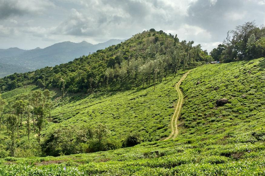 वायनाडच्या दक्षिणपूर्व भागात निलीमला पर्वत रांगा आहेत. येथून मीनमुट्टी या जलसागराचे विहंगम दृश्य पाहायला मिळते.