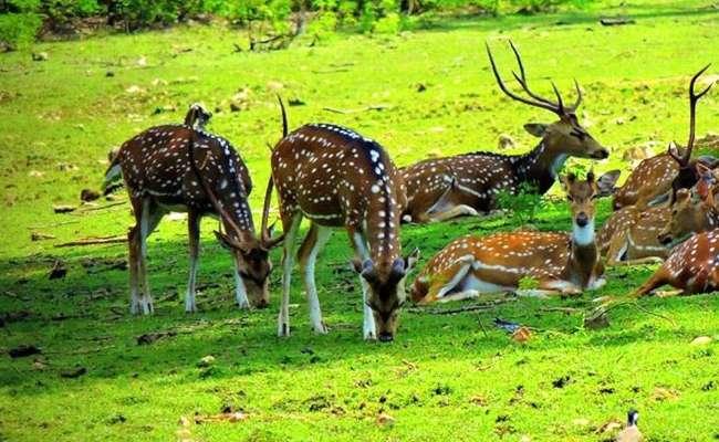 उन्हाळ्याच्या सुट्ट्यांमध्ये मुलांना फिरायला कुठे घेऊन जायचं हा प्रश्न असतो. मुलांचा आणि वन्य प्रेमींचा ओढा कायम प्राणी पक्ष्यांकडे असतो. यंदाच्या सुट्टीत तुम्ही मुलांसोबत अभयारण्याची सफर करायला जाऊ शकता. आपल्या महाराष्ट्रातच खूप सुंदर अशा प्रकारचे अभयारण्य आहेत. त्यातील या निवडक 10 अभयारण्यांची सफर तर तुम्ही नक्कीच करायला हवी.