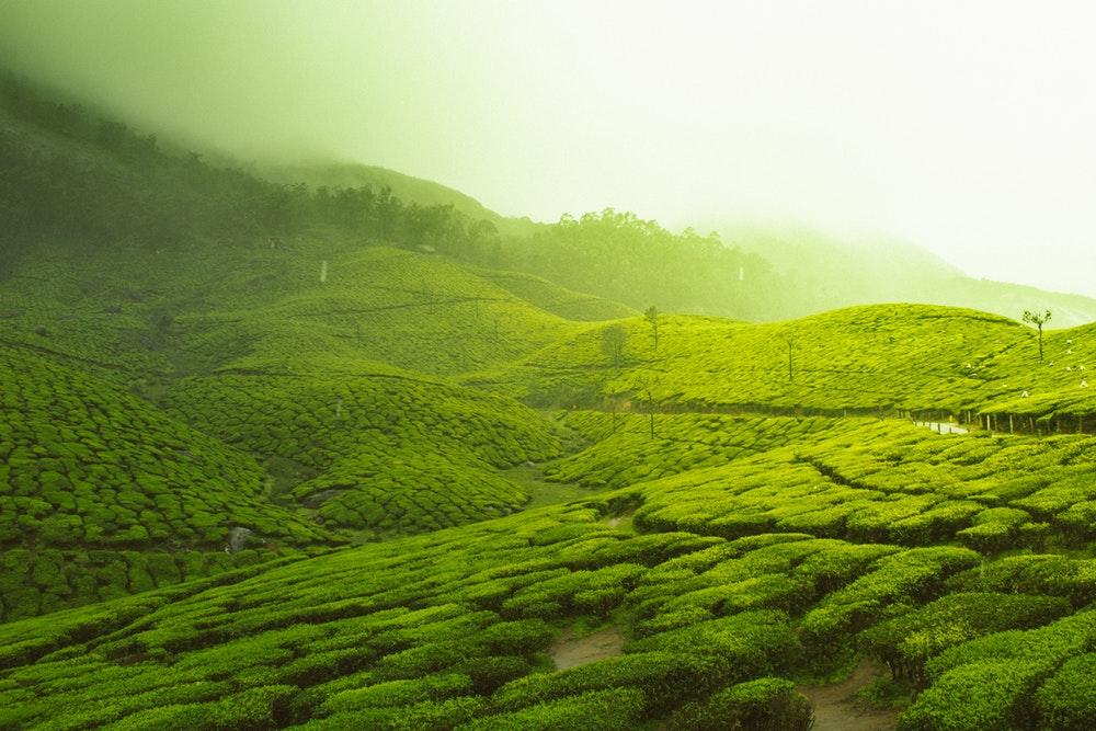 केरळ- मुन्नार हे केरळमधील थंड हवेचं ठिकाण म्हणून प्रसिद्ध आहे. शांत, थंड वातावरण, चहाचे मळे तिन्ही बाजूंनी डोंगररांगा पाहण्यासाठी मुन्नारला भेट द्यावी.