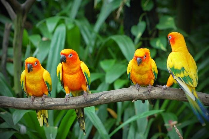 रायगड- कर्नाळा अभयारण्यात एका वर्षात साधारण 125 ते 150 जातींचे पक्षी आढळतात. मलबार, व्हिसलिंग थ्रश, कोकीळ, फलाय कॅचर,भोरडया, तांबट, कोतवाल,पांढर्या पाठीची गिधाडे, दयाळ शाहीनससाणा, टिटवी, बगळे असे अनेक पक्षी आढळतात.