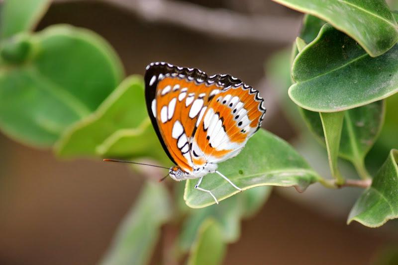 पुण्यापासून जवळ ताम्हिणी अभयारण्यात सस्तन प्राण्यांच्या 28 प्रजाती आहेत. स्थानिक पक्षांच्या 12 प्रजातींसह येथे 150 प्रकारचे पक्षी तुम्हाला इथे पाहता येतात. फुलपाखरांच्या वेगवेगळ्या प्रजाती इथे आहेत. ताम्हिणी अभयारण्य म्हणजे फुलपाखरांचं निवासस्थान असा उल्लेख केला जातो. इथे 72 प्रकारची फुलपाखरं आहेत. 18 प्रकारचे सरपटणारे प्राणी आणि 33 प्रकारच्या दुर्मिळ वनस्पती पाहायला मिळतात .