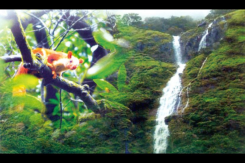सफर अभयारण्यांची : उन्हाळ्याच्या सुट्टीत सहज प्लॅन करू शकाल या 10 जंगल सफारी