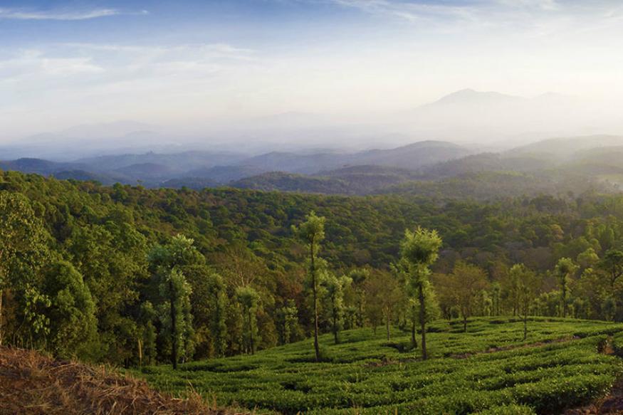 केरळ वायनाड- केरळचा स्वर्ग म्हणून वायनाडची ओळख आहे. सुंदर धबधबे, हिरवागार परिसर, कॉफीचे मळे, आणखी बरंच काही तुम्हाला स्वर्गसुख देऊन जातं
