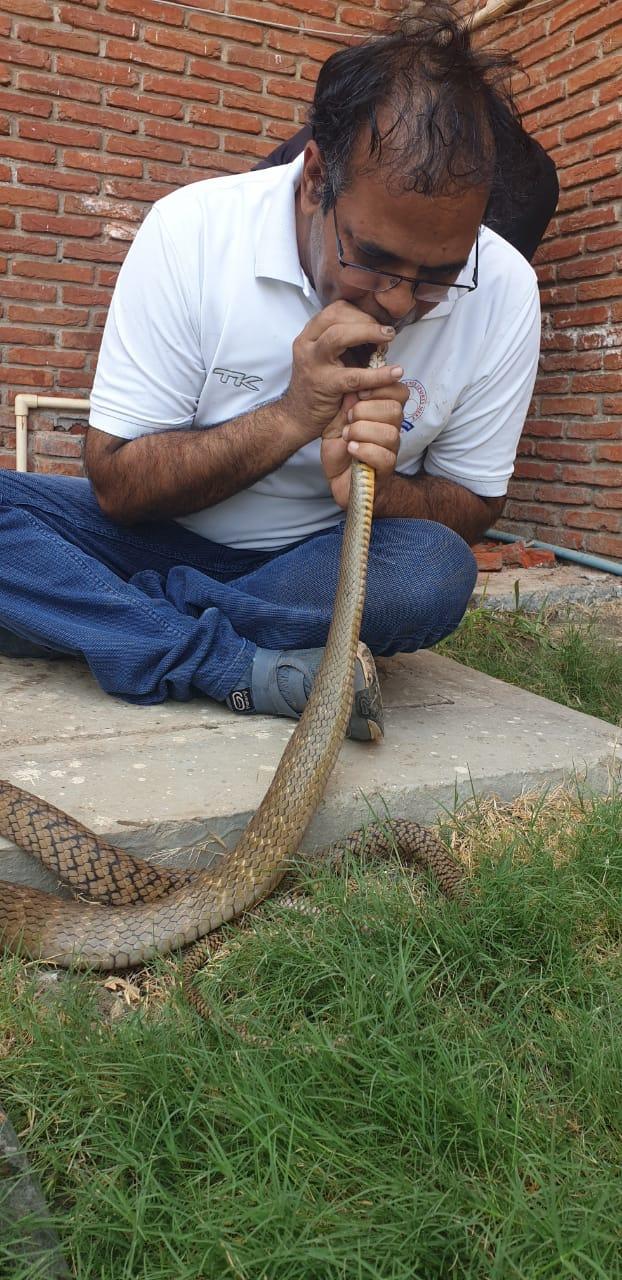 इंदौरमध्ये एका शाळेच्या परिसरात लोकांनी सापाला घाबरून त्याच्यावर कीटकनाशक टाकलं.  या कीटकनाशकामुळे साप बेशुद्ध अवस्थेत पडला होता.