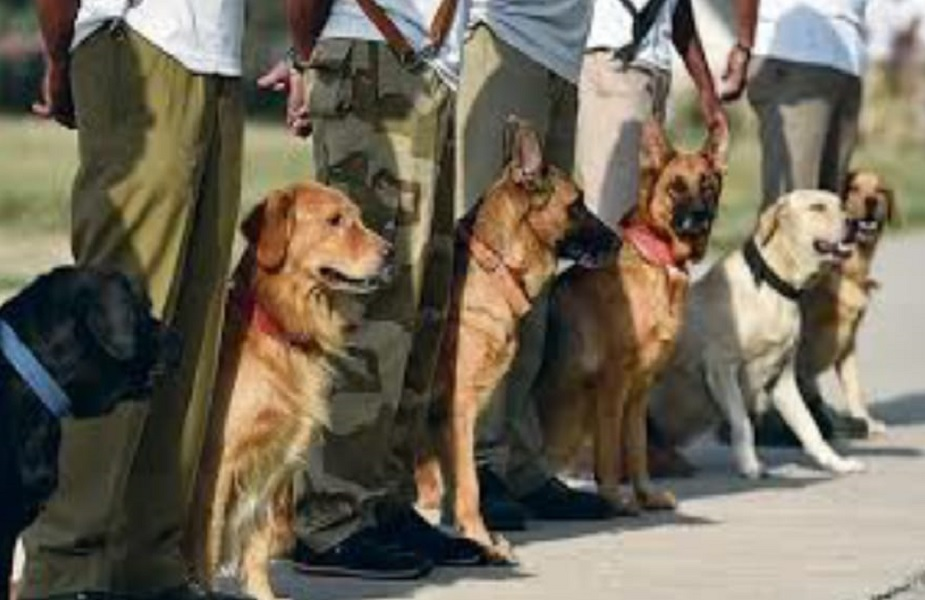 या कुत्र्यांना कॅमेरे लावून सीमेवर तैनात करण्यात येईल.