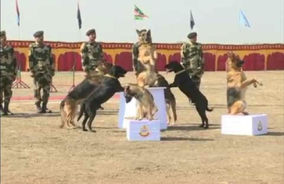 ग्वाल्हेरमधल्या राष्ट्रीय श्वान प्रशिक्षण संस्थेमध्ये या कुत्र्यांना प्रशिक्षण दिलं जात आहे.