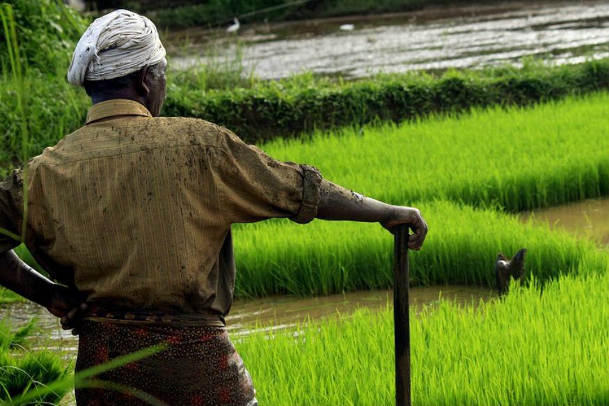 देशातील बिहार, उत्तर प्रदेश, आंध्र प्रदेश, पश्चिम बंगाल, बिहार आडिसा, आसाम, हरियाणा आणि तामिळनाडूमध्ये भाताचं उत्पन्न घेतलं जात. भारतातून तांदूळ निर्यात देखील केला जातो. एक किलो तांदळासाठी 3 ते 5 हजार लिटर पाण्याची गरज असते.