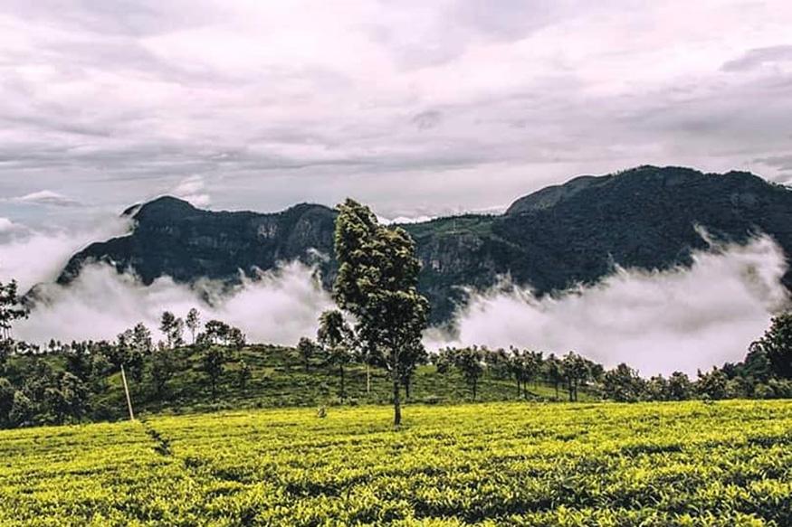 कूर्ग, कर्नाटकः बॅंगलोरपासून By road 270 किमी. वर असणारं कूर्ग पावसाळ्यात फिरण्यासाठी चांगलं ठिकाण आहे. कॉफीच्या मळ्यांनी भरपूर असलेलं हे ठिकाण त्याच्या सुंदरतेसाठी प्रसिद्ध आहे. जर, तुम्ही साहसी असाल तर ताडियंदामोल या शिखराच्या टोकावर ट्रेकिंगसाठी जाऊ शकता. (फोटो – बिमल राठ)