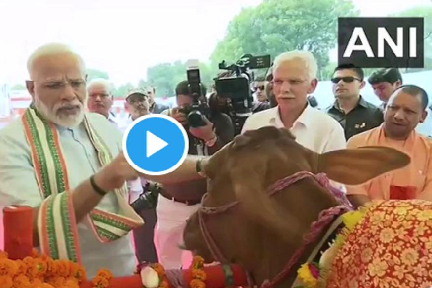 VIDEO : मोदी म्हणतात, 'गाय आणि 'ॐ' असं ऐकल्यावर काही लोकांचे कान टवकारतात'