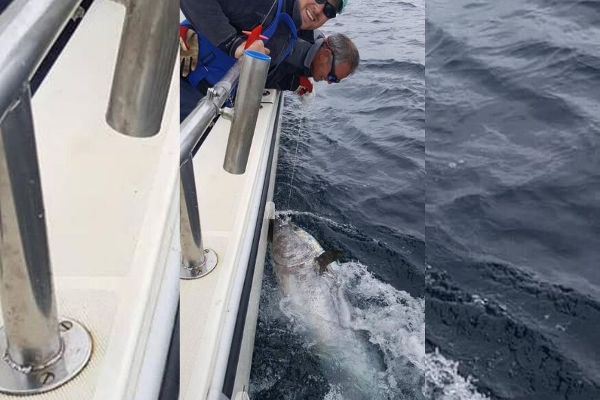 8.5 फूटाचा मासा, किंमत 23 कोटी! पाहा काय केलं 'एका कोळियानं'