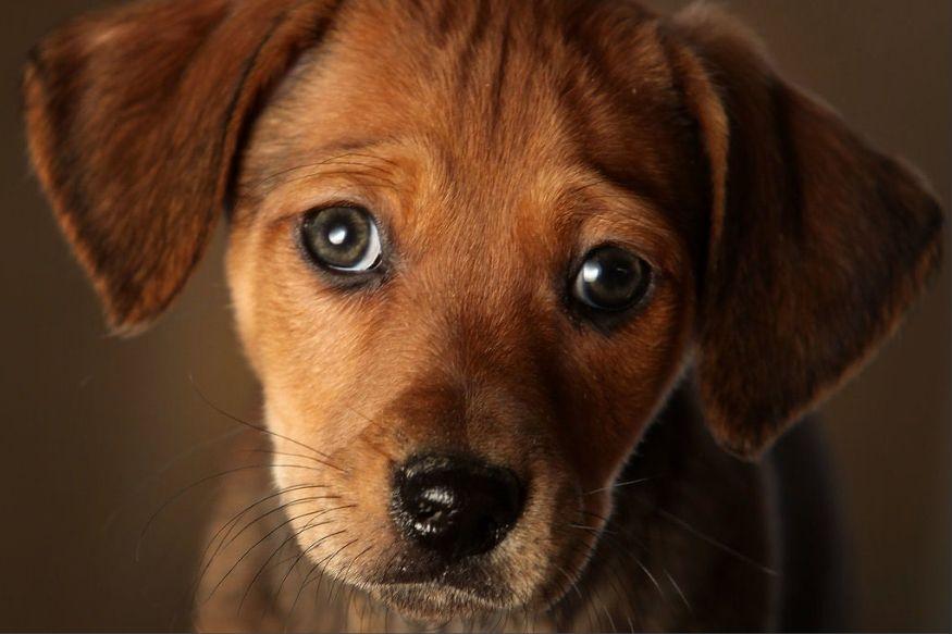 कुत्र्यांच्या या संकेतांकडे लक्ष द्या, नाही तर तिजोरी होईल रिकामी