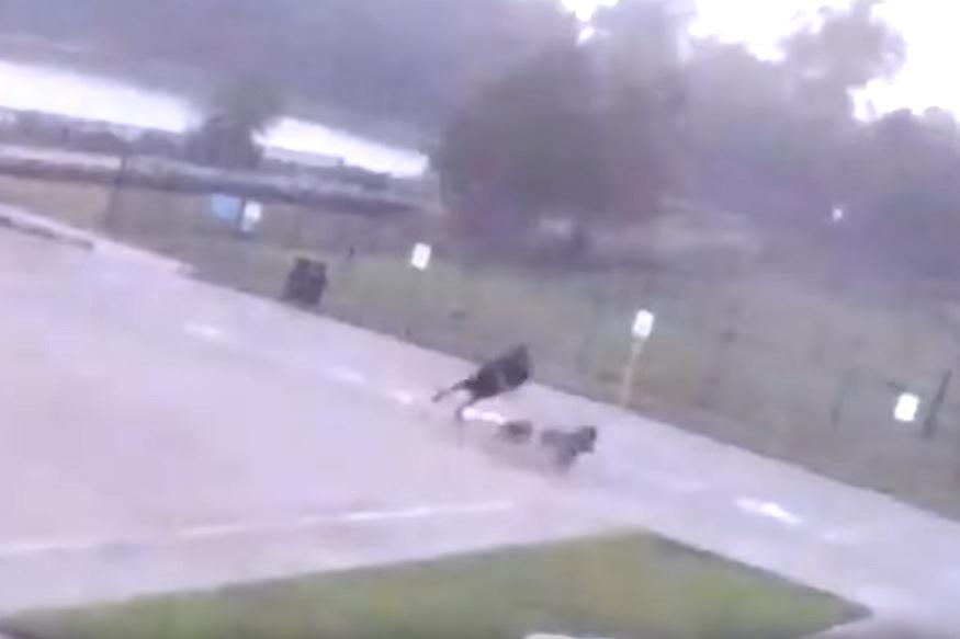 कुत्र्यांना फिरवायला गेलेल्या व्यक्तीवर कोसळली वीज, पाहा हा धक्कादायक VIRAL VIDEO