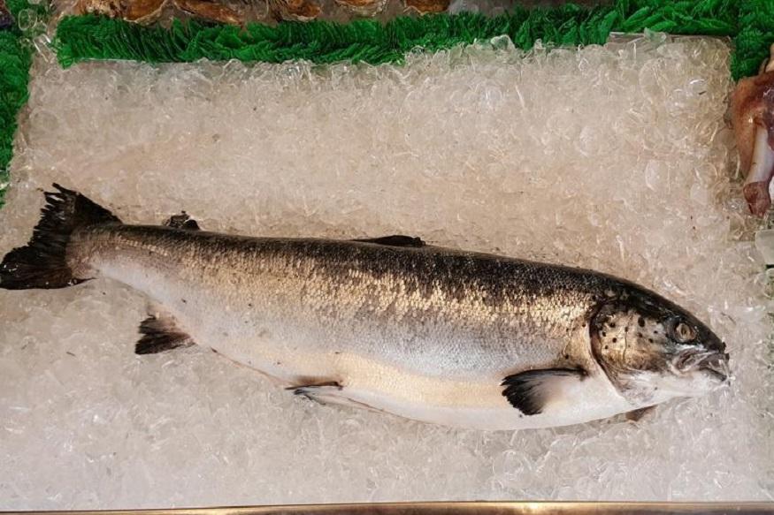 बापरे! गंगेत सापडला 18 किलोचा जम्बो मासा, किंमत वाचून व्हाल थक्क