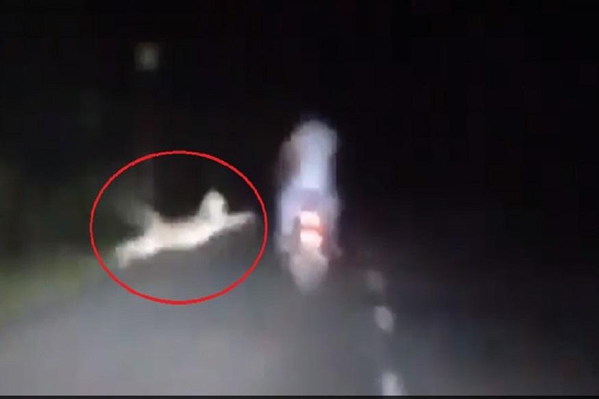 रात्रीच्या अंधारात बिबट्यानं केला दुचाकिस्वारांवर हल्ला आणि..., पाहा हा खतरनाक VIDEO