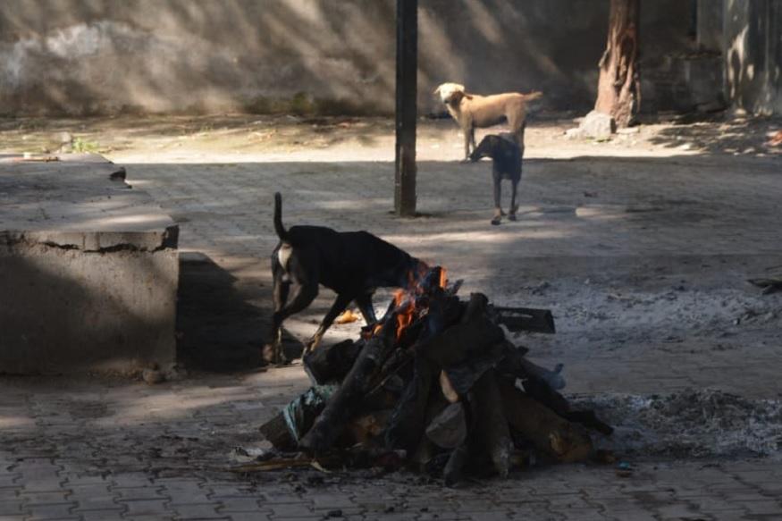 अंत्यविधीत घडला धक्कादायक प्रकार, अर्धवट जळालेला मृतदेह कुत्र्याने ओढून नेला आणि...