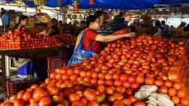 टोमॅटोचे भाव जोरदार घसरले; ग्राहकांना आनंद तर शेतकरी नाराज