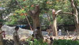 मुंबई हायकोर्टाची वृक्षतोडीवर 23 मार्चपर्यंत बंदी
