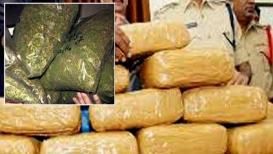 पनवेलमध्ये स्कोडा कारमधून १०० किलो गांजा जप्त, तिघांना अटक