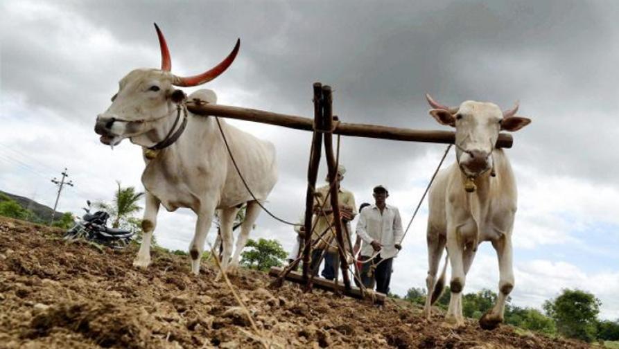 दहा लाख बोगस शेतकरी आले कुठून?