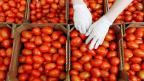 जाणून घ्या टोमॅटोचे 'हे' फायदे...