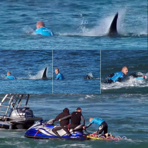 shark attack4