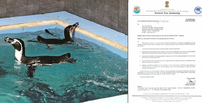 Penguine Notice