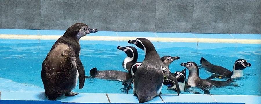 Penguine Banner1