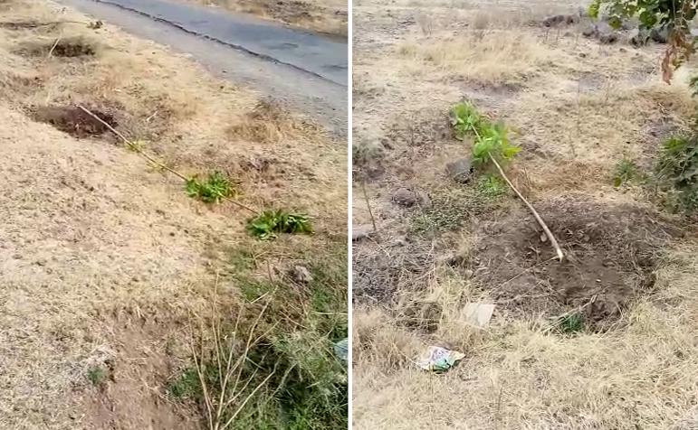 सयाजी शिंदेंनी लावलेली झाडं अज्ञातांनी तोडली