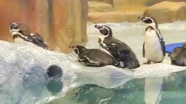 Penguine-3