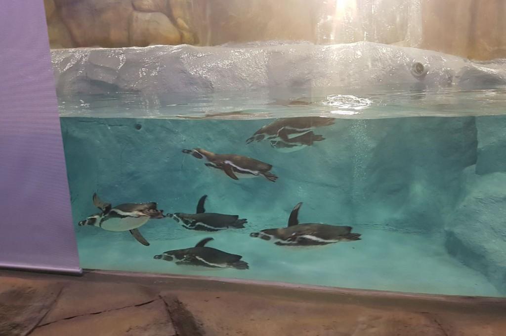 penguin_mumbai