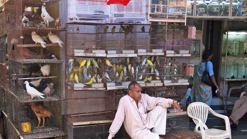 संपूर्ण मुंबईत बेकायदेशीर पशू-पक्षांची विक्री बंद करा - हायकोर्ट