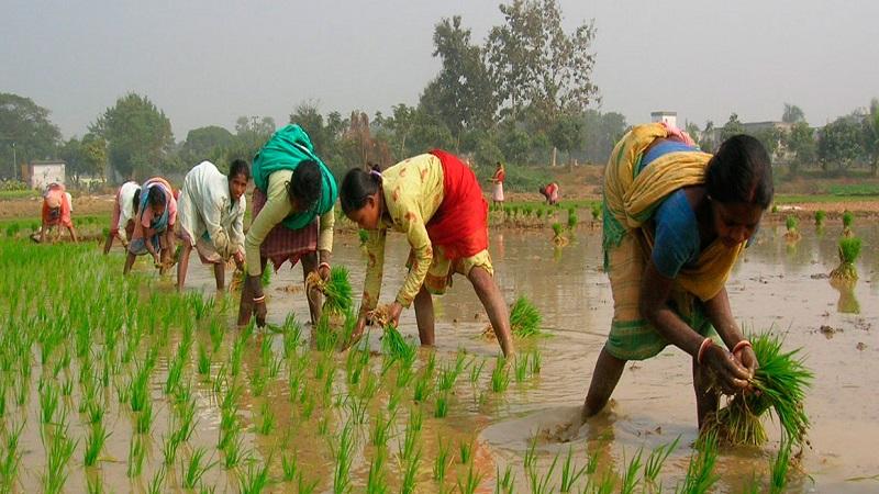 शेतकऱ्यांना राष्ट्रीयकृत बँकांचे दार खुले, 16 जिल्ह्यात मिळणार कर्ज