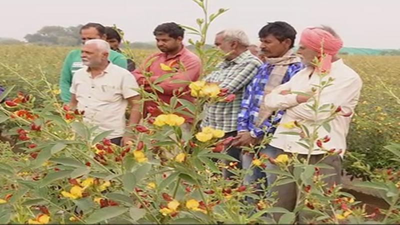 गुजरात सरकारचं शेतीकडे दुर्लक्ष-पाटीदार शेतकरी