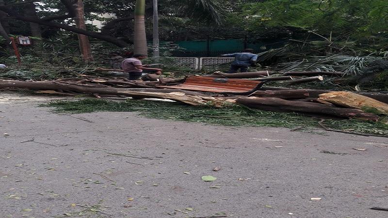 चेंबूरमध्ये  अंगावर झाड  कोसळल्याने महिलेचा मृत्यू