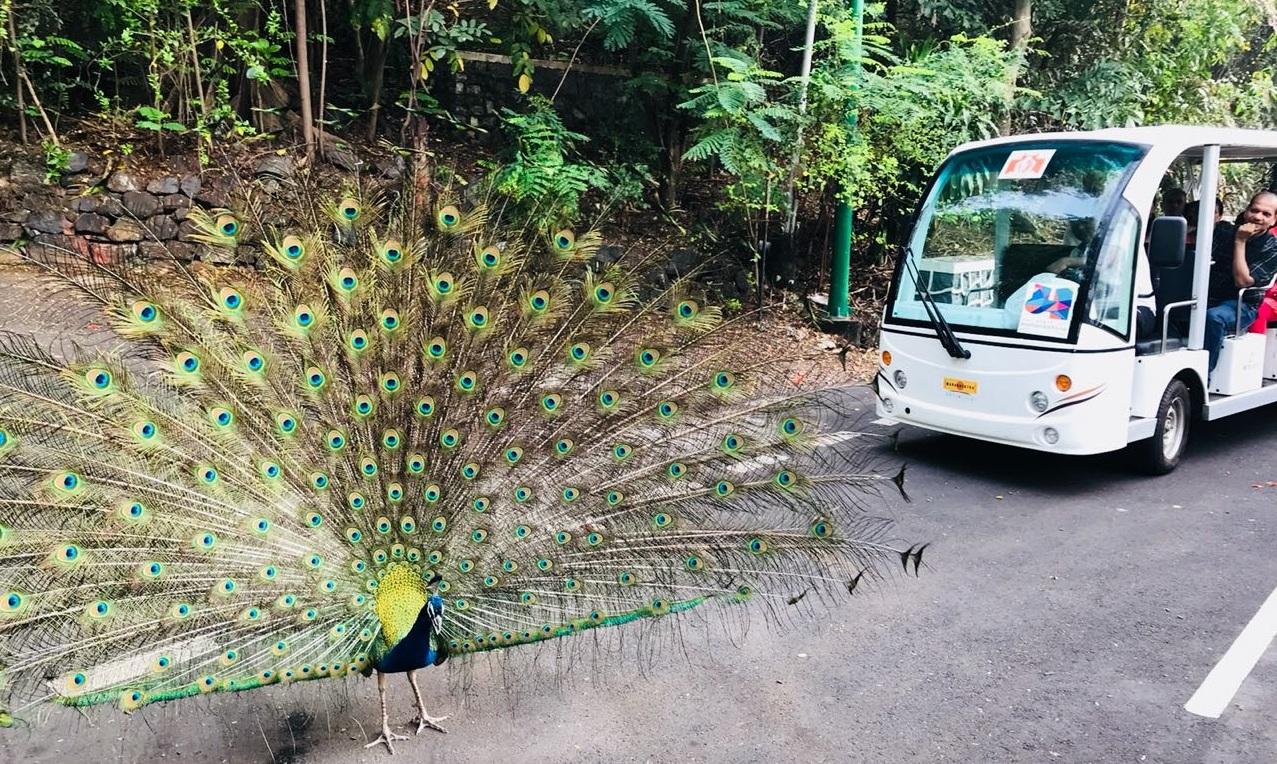 लोकांना राजभवन परिसराची सैर करण्यासाठी वापरण्यात येणाऱ्या बॅटरीबसचे चालक राजेश हौसनुर यांनी हे छायाचित्र काढले.