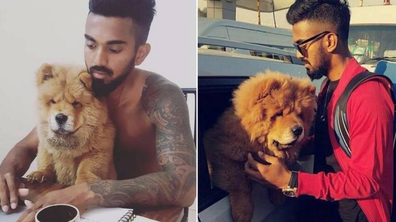के.एल. राहुलकडे चाऊ चाऊ जातीचा कुत्रा आहे.