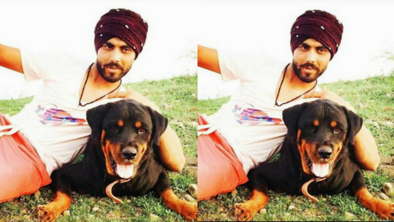 रवींद्र जडेजाकडे रॉटवीलर जातीचा कुत्रा आहे.