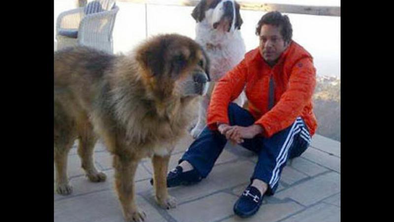 सचिन तेंडुलकरी यात मागे नाही. सचिनकडे सेंट बनॉर्ड जातीचा कुत्रा आहे.