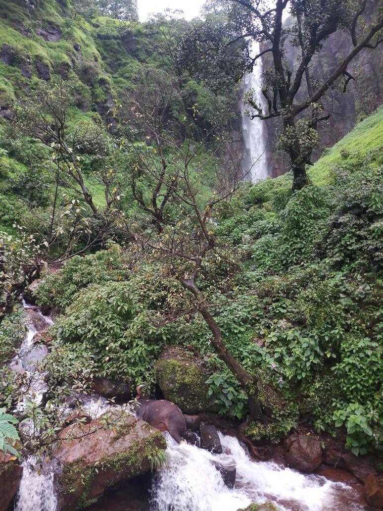 या घटनेची माहिती स्थानिकांनी कोयना वनविभागाच्या अधिकाऱ्यांना दिली. वन्यजीव विभागाचे अधिकारी सर्व तयारीनिशी घटनास्थळी दाखल झाले आहेत.