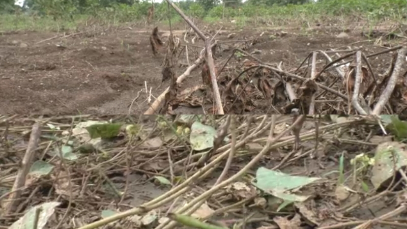 पावसानं शेतातली माती गेली, खडक राहिला, आता करायचं काय? मराठवाड्यातल्या शेतकऱ्यांची व्यथा