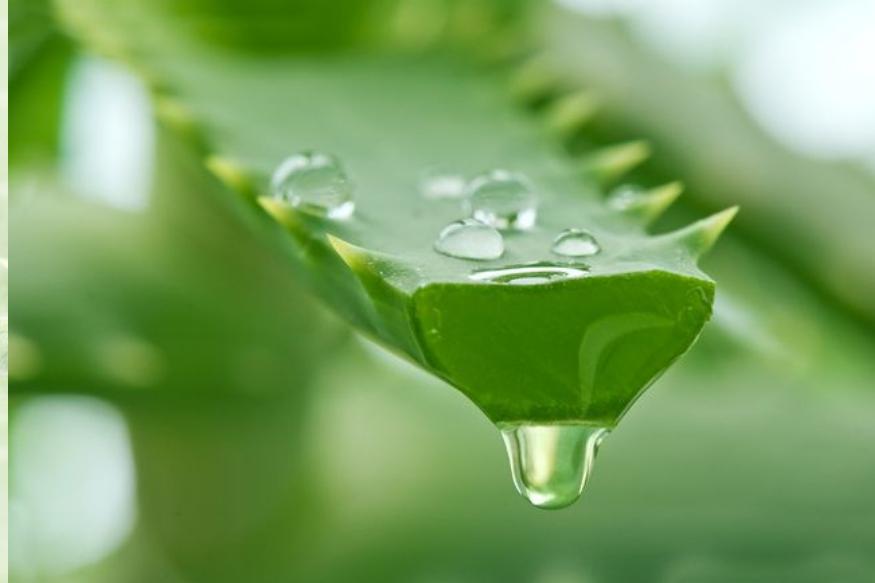 कोरफडीच्या रसात एन्थ्रोक्विनोन असते. कोरफड खाल्यामुळे तुम्हाला हगवण किंवा अल्सर होऊ शकतो.